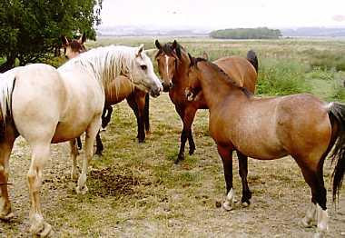 poniesonbog1